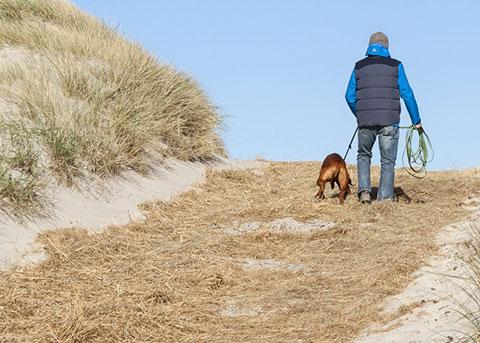 Hund an der Nordsee
