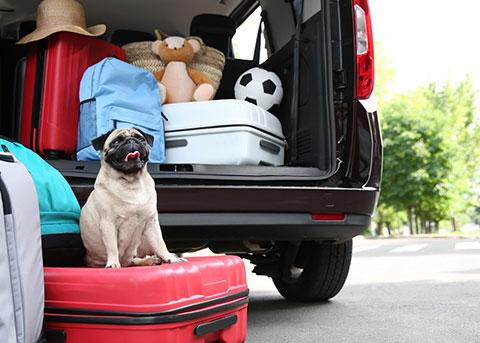 Packliste für Hunde