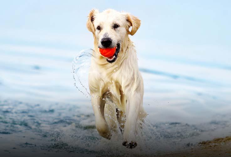 Ferienhaus mit Hund in Dänemark