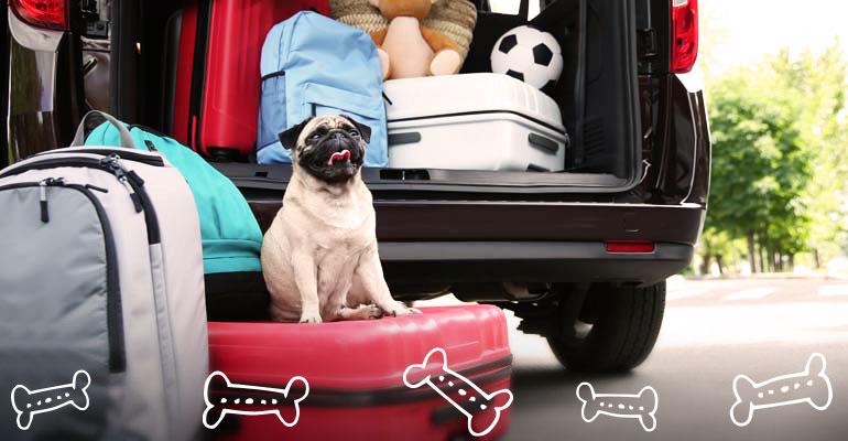 Mit dem Hund im Auto nach Dänemark